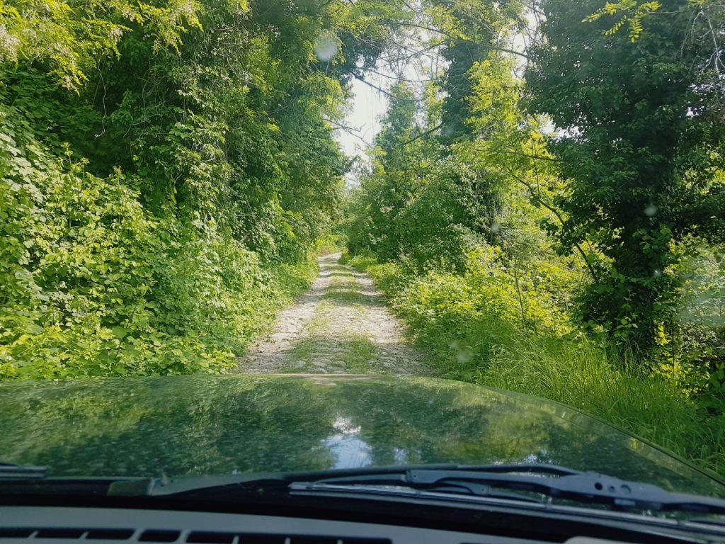 strada sterrata bosco